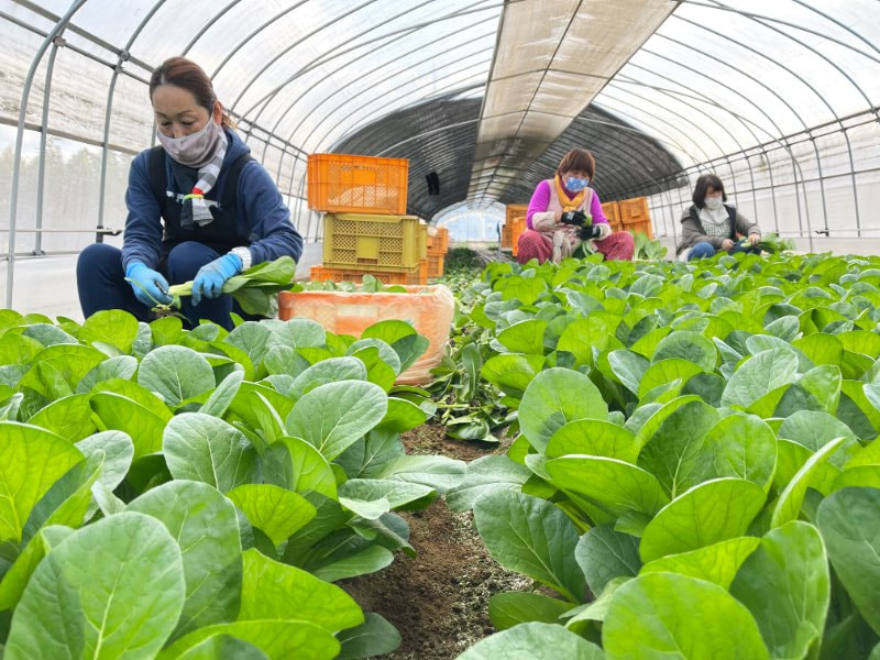 野菜の収穫・袋詰めスタッフ